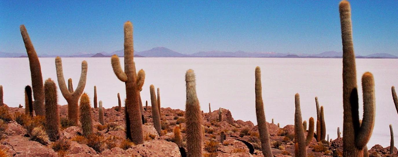 インカワシ島のサボテンです。砂漠に突如として生命があることに感動できます。